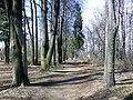 Петровский парк в рыбинске 16.jpg