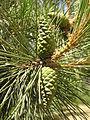 Растения в Седово 174.JPG