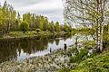 Река Большая Ижорка.jpg