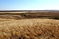 Речка Кураша. Вид в южном направлении - panoramio.jpg