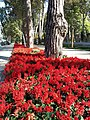 Скверы Душанбе 12.jpg