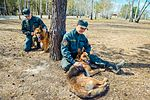 Собаки НГУ 4714 (19328618756).jpg