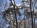 Украина, Киев - Голосеевский лес 169.jpg