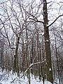 Чернечий Ліс 3.jpg