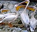 Чудові тварини 10.jpg