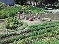 Юннатівський ботанічний сад в Сумах.jpg