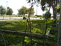 ورودی برازجان , ج.طاهری - panoramio.jpg