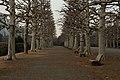 冬の散歩道 (46937268211).jpg