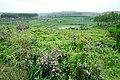 后山的风景 - panoramio - jiang-wen-jie (1).jpg