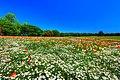 昭和記念公園 - panoramio (3).jpg