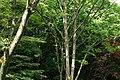 東高根森林公園 - panoramio (40).jpg