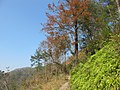 枫林古道 - panoramio (3).jpg