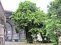 臺南二中風雨球場旁的榕樹 - panoramio.jpg