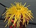 菊花-蟠桃宮 Chrysanthemum morifolium 'Fairy Peach Palace' -中山小欖菊花會 Xiaolan Chrysanthemum Show, China- (12084962245).jpg
