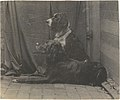 -Thomas Eakins's Dog Harry and Another Setter- MET DT8253.jpg