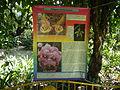 05704jfMidyear Orchid Plants Shows Quezon Cityfvf 33.JPG