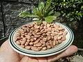 0682Pinto bean textures 09.jpg