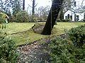 14 March 2010 fallen tree (4).jpg