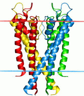 Voltage-gated potassium channel - Potassium channel KcsA. Calculated hydrocarbon boundaries of the lipid bilayer are indicated by red and blue dots.