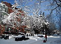 2000 block of Q Street, N.W. - Blizzard of 2010.JPG