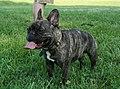2008-07-28 Dog at Frolick Field.jpg