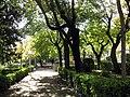 200 Parc del Pla de l'Alemany.jpg