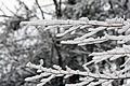 2011 snow february1 (5430874112).jpg