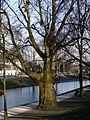 20130401 39 Utrecht.JPG