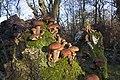 20141113 025 Well De Hamert Paddenstoel (15781122711).jpg