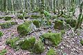 2014 Imeretia, Rezerwat przyrody Sataplia (03).jpg