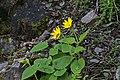 2015.05.30 14.46.03 IMG 2564 - Flickr - andrey zharkikh.jpg