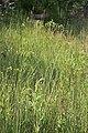 2015.06.09 18.20.29 IMG 2715 - Flickr - andrey zharkikh.jpg