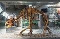 2015 Jaskinia Niedźwiedzia w Kletnie, szkielet niedźwiedzia jaskiniowego 01.JPG