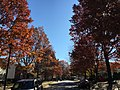 2016-11-18 11 49 01 View south along Dairy Lou Drive at Allness Lane in the Franklin Farm section of Oak Hill, Fairfax County, Virginia during autumn.jpg