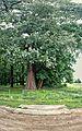 20160719 1629 377 szlichtyngowa-park-pah-3-mk-a.jpg