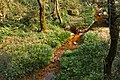 201612 Acorus gramineus alongside the Jinlan Ancient Trail.jpg