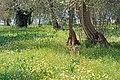 2017-04-10 04-14 Gardasee 184 Sirmione (33571732773).jpg