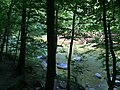 2017-08-19 11 15 55 View southwest through the trees towards Bull Run from the Bull Run-Occoquan Trail between the Yellow Trail and the Red Trail within Hemlock Overlook Regional Park, in southwestern Fairfax County, Virginia.jpg