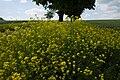 2018-05-26 Kaltensundheim-9501.jpg