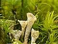 2021-04-12 mousse-lichens-100f.jpg