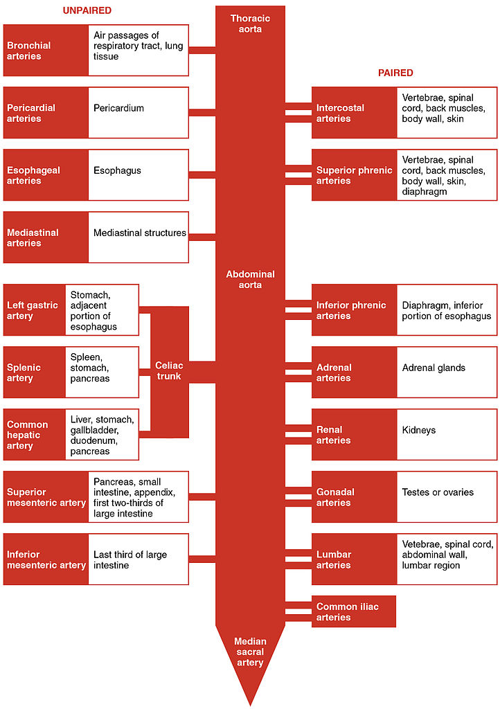 Flow Chart Of Distribution Channels: 2125 Thoracic Abdominal Arteries Chart.jpg - Wikimedia Commons,Chart