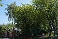 46-101-5021 парикове дерево кибальчича.jpg