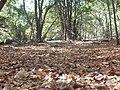 7 Tazas, Chile - panoramio.jpg