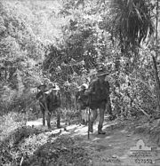 Soldiers march along a jungle track