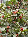 A bird in a cherry tree.jpg