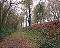 A carpet of brown leaves - geograph.org.uk - 1063412.jpg