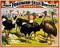 A congress of the great birds of the world, poster for Forepaugh and Sells Brothers, ca. 1898.jpg
