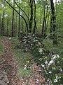 A passeggio nel Bosco...le mie scarpinate - panoramio (3).jpg