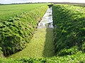 A very green ditch - geograph.org.uk - 758739.jpg