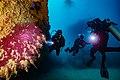 Abrolhos Marine National ParkRobertoCostaPinto32.jpg